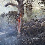 وسعت جنگلهای جهان بیش از ارزیابیهای گذشته است