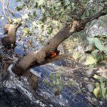 300 هکتار از جنگل های منطقه حفاظت شده کوسالان و سرپل ذهاب در آتش سوخت