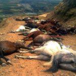 کشتار دسته جمعی اسب و قاطر کولبران از سوی نیروهای انتظامی